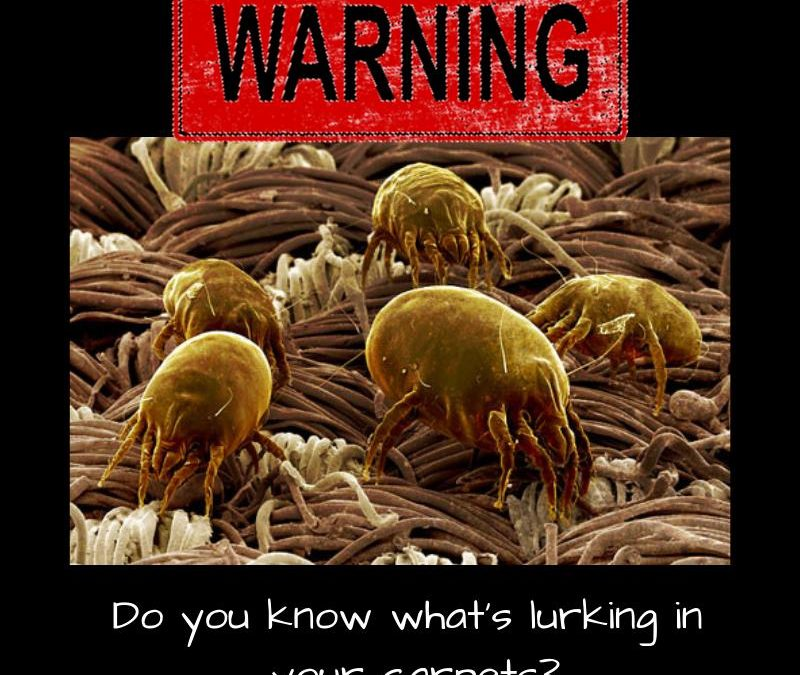 Do You Know What's Lurking In Your Carpets?