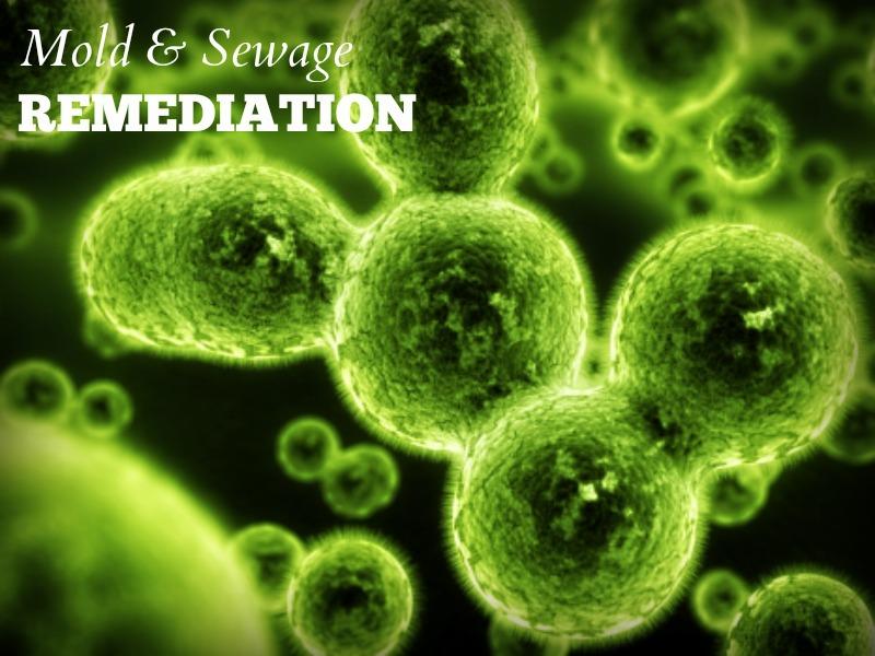 mold green
